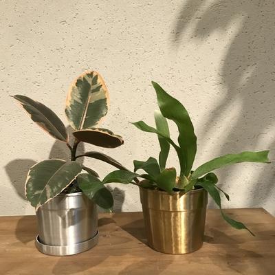 経年変化を楽しめる植木鉢
